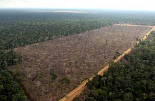 Deforestation in The Amazon Rainforest facts