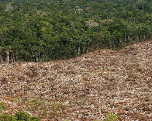 Deforestation in The Amazon Rainforest image