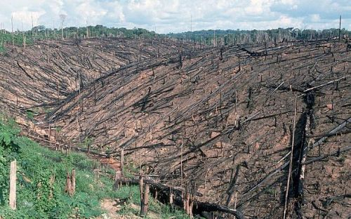 Facts about Deforestation in The Amazon Rainforest