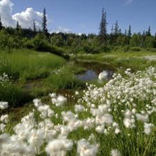 Denali National Park Beauty
