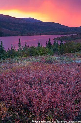 Denali National Park Images
