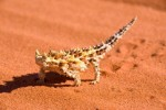 10 Facts about Desert Animals