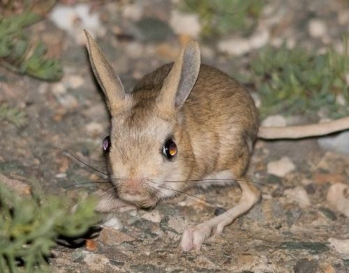 Desert Animals Images