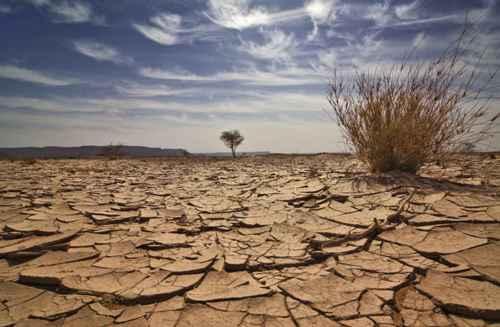 Desert Biome Image