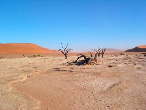 Desert Climate Pic