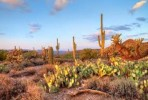 10 Facts about Desert Environments