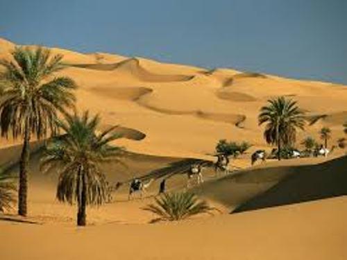 Desert Environment Facts