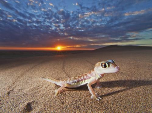 Desert Environment Pic