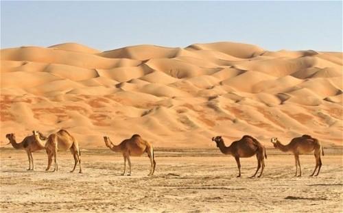 Desert Habitat Pic