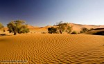 10 Facts about Deserts