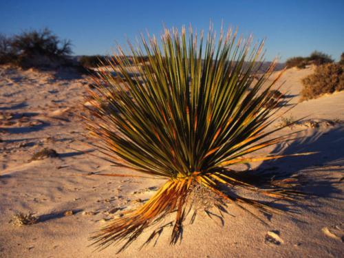 Desert Plant Images