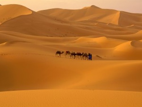 Facts about Desert Climate