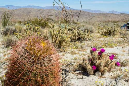 Facts about Desert Plants
