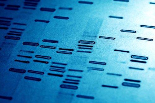 DNA fingerprints pic