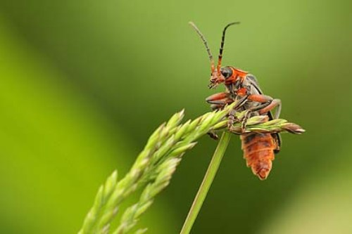 Different Insects Pic