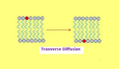 Diffusion Pic
