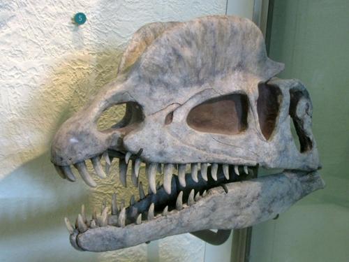 Dilophosaurus Facts