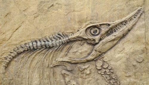 dinosaur fossils facts