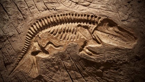 dinosaur fossils pictures