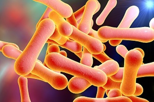 diphtheria bacteria