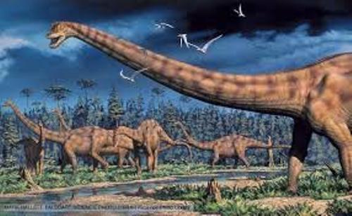 diplodocus pictures