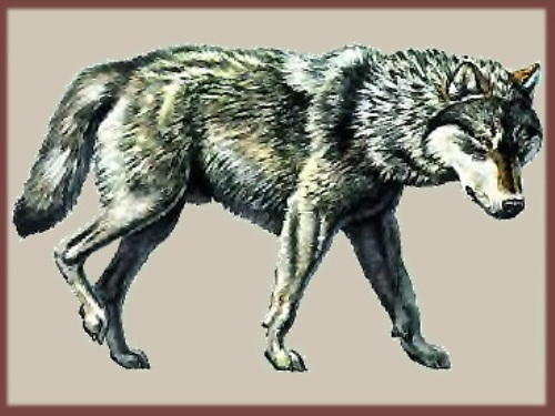 dire wolf pic