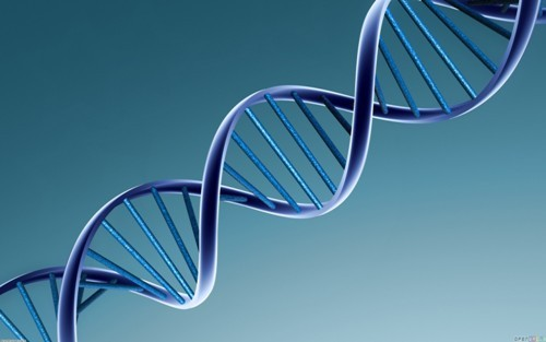 facts about dna structure