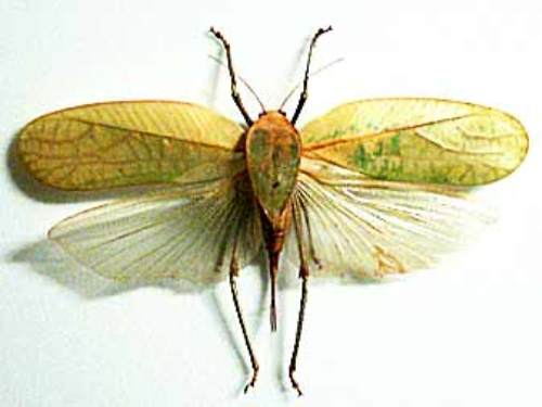 Facts about Different Insects