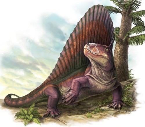 Facts about Dimetrodon