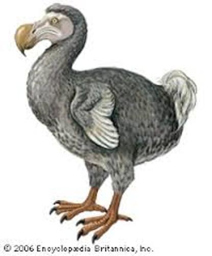 dodo birds facts