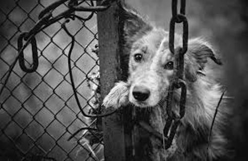 dog abuse image