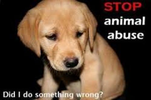 dog abuse pic