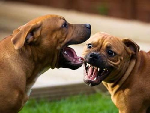 dog fighting image