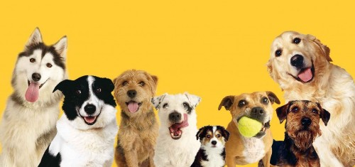 dogs trust images