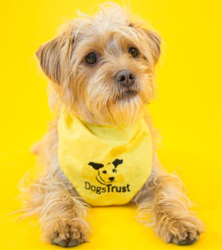 dogs trust pic
