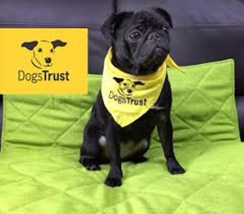 dogs trust pictures