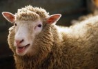 10 Facts about Dolly the Sheep