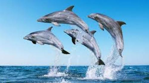 dolphins images