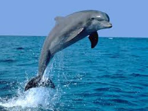 dolphins pic