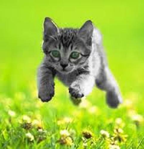 domestic cat pic