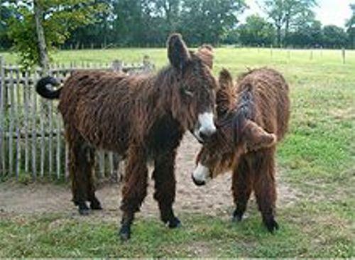 donkeys facts