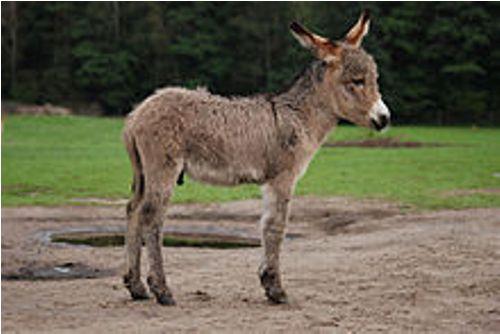 donkeys images