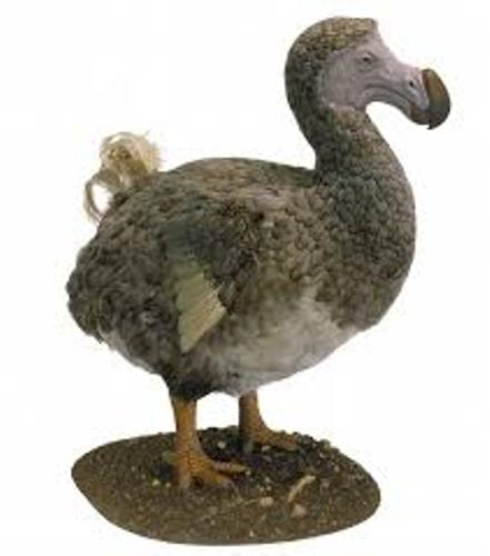 facts about dodo birds