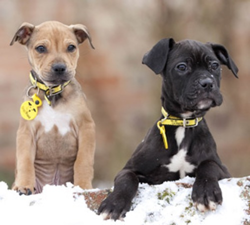 facts about dogs trust