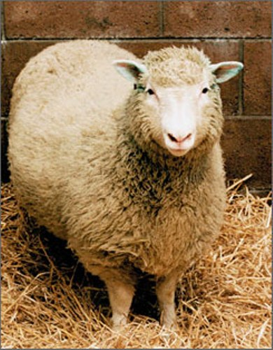 facts about dolly the sheep