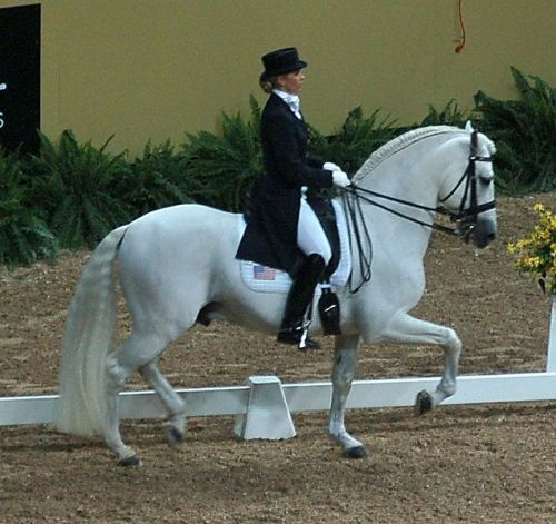 facts about dressage