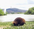 10 Facts about Echidnas