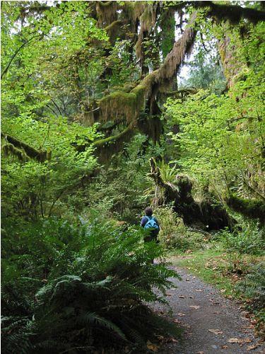 Ecosystem Image