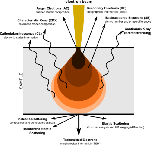 Electron Microscope Image